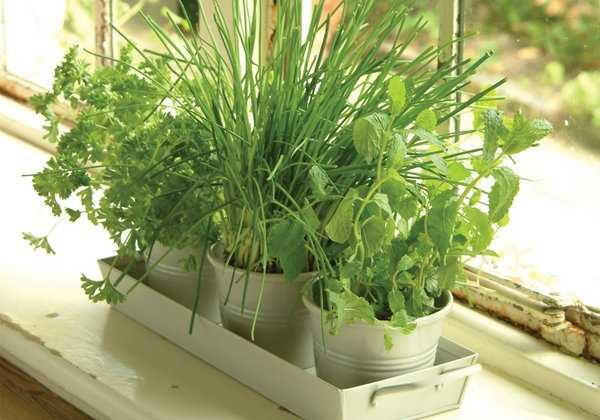 Urban Gardening: Herbs and Veg